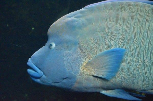 photo aquarium nausicaa boulogne mer 62 pas de calais centerblog