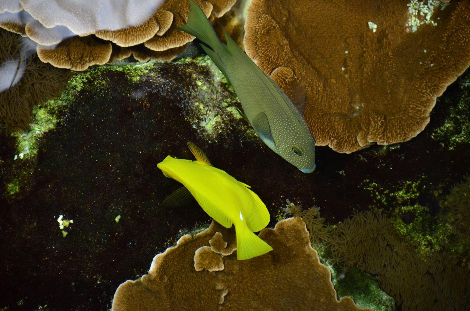 62 aquarium nausicaa 62 boulogne mer