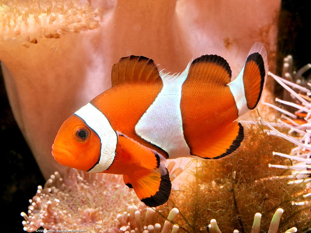 Vente d 39 aquarium for Vente poisson aquarium pas cher