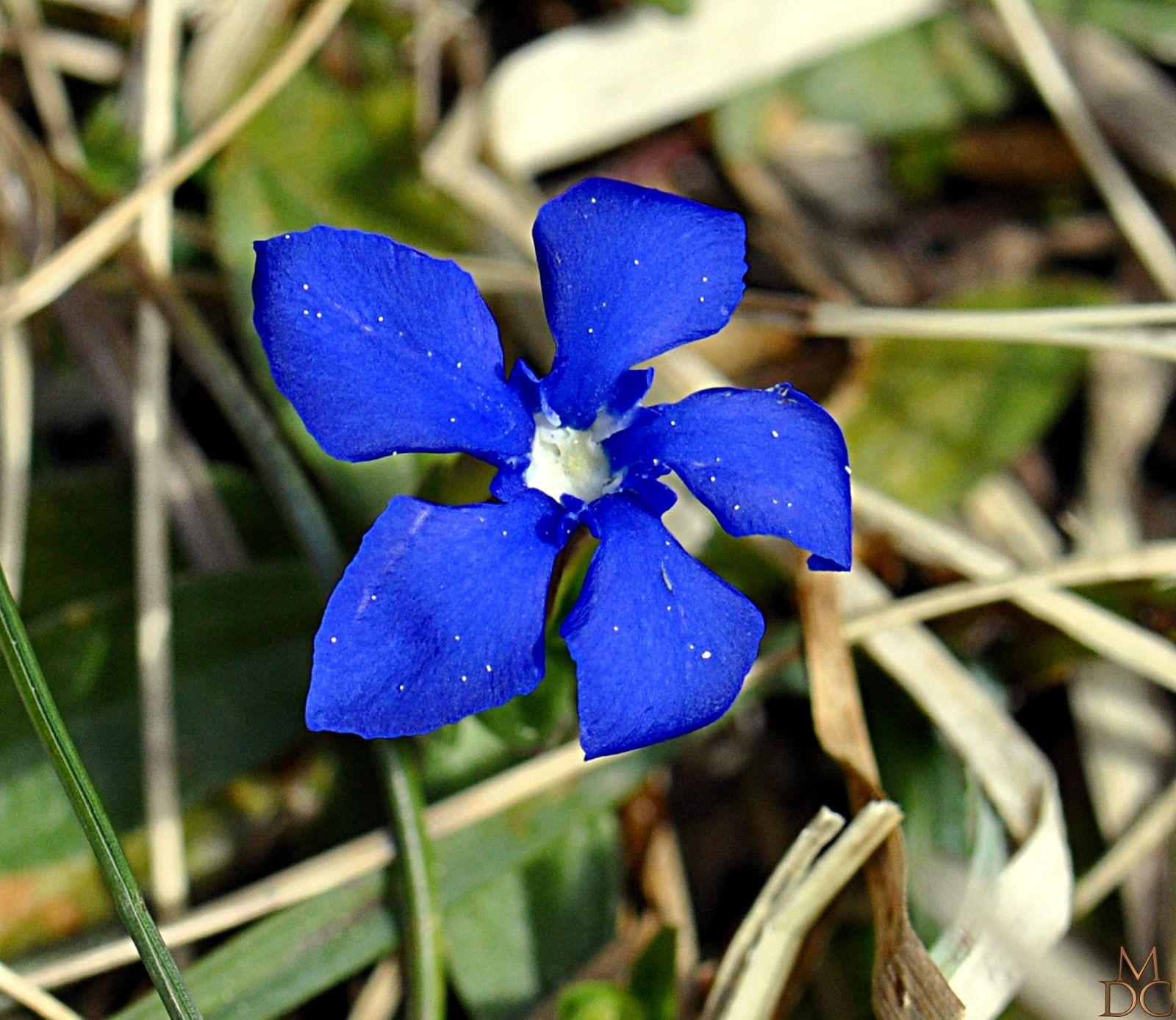 Fleurs Bleues Ou Violettes